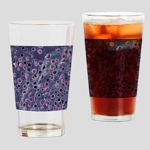 Hyaline cartilage, SEM Drinking Glass