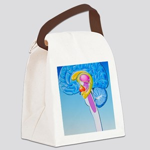 Illustration of anatomy of limbic Canvas Lunch Bag
