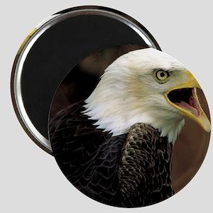 Voiceful Bald Eagle Magnet