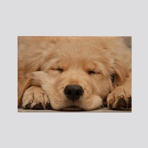 Golden Retriever Puppy Rectangle Magnet