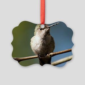Annas Hummingbird Picture Ornament