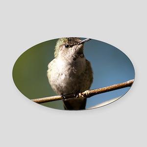 Annas Hummingbird Oval Car Magnet