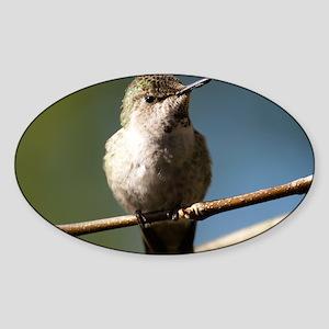 Annas Hummingbird Sticker (Oval)
