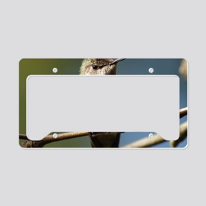 Annas Hummingbird License Plate Holder