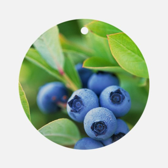 Blueberries growing on a shrub Round Ornament