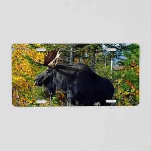 Moose 14x6 print Aluminum License Plate
