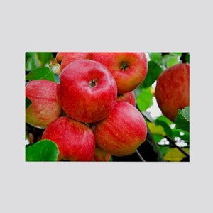 Red Apples on Tree Rectangle Magnet
