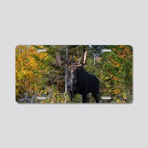 Moose in ditch 2 11x17 post Aluminum License Plate