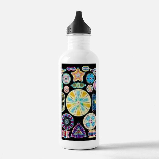 Art of Diatom algae (f Water Bottle