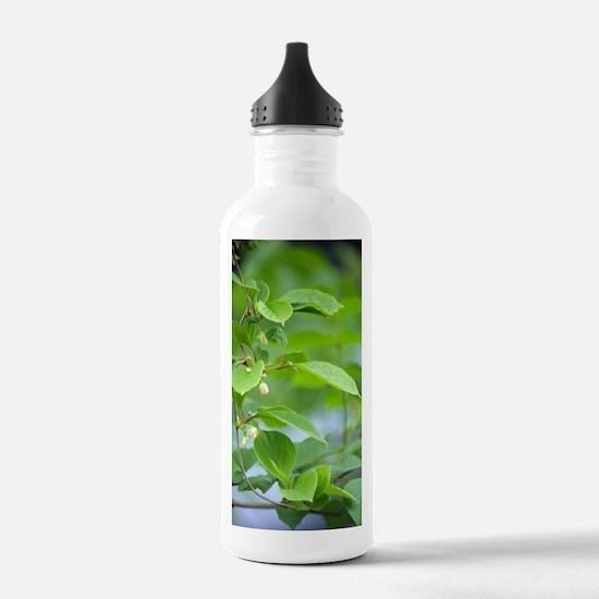 Chinese schisandra (Sc Sports Water Bottle