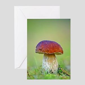 Cep mushroom (Boletus edulis) Greeting Card