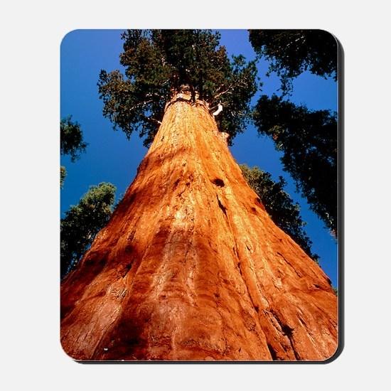 Giant Sequoia 'General Sherman' Mousepad