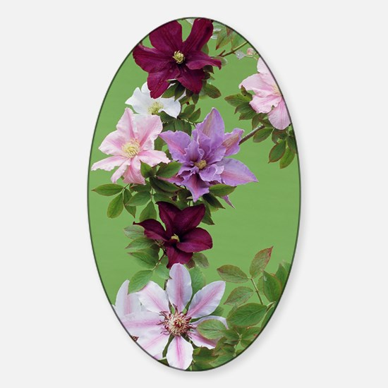 Mixed clematis flowers Sticker (Oval)
