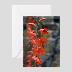 Watsonia 'Stanford Scarlet' flowers Greeting Card