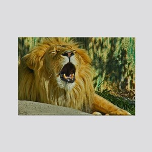 Tired Lion Rectangle Magnet