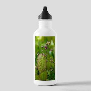 Alpine barrenwort (Epi Stainless Water Bottle 1.0L
