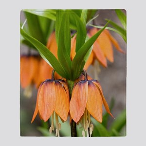 Crown imperial (Fritillaria imperial Throw Blanket