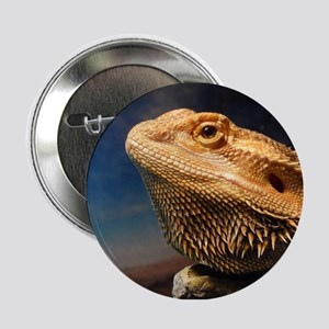 ".young bearded dragon. 2.25"" Button"