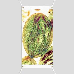 Chloroplast, SEM Banner