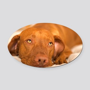 dreamy dog Oval Car Magnet
