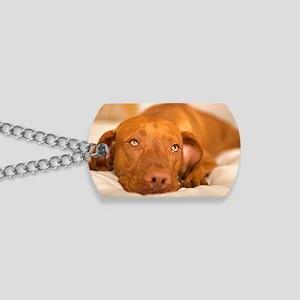 dreamy dog Dog Tags