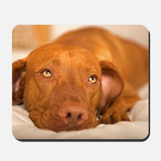 dreamy dog Mousepad