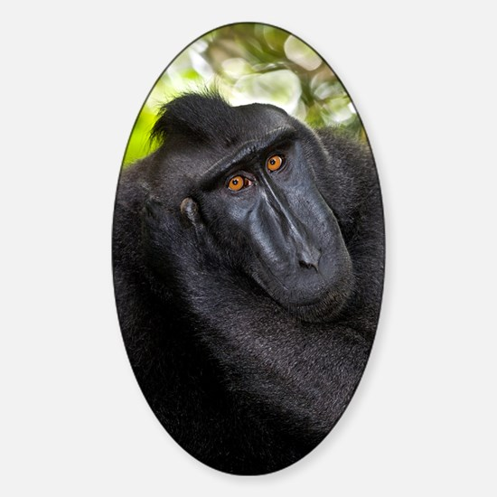 Crested black macaque Sticker (Oval)