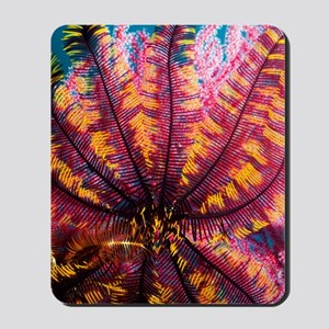 Featherstar on gorgonian coral Mousepad