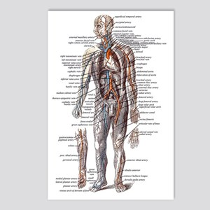 Anatomy of the Human Body Postcards (Package of 8)