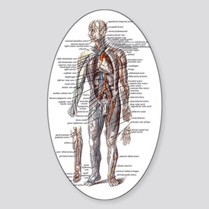 Anatomy of the Human Body Sticker (Oval)