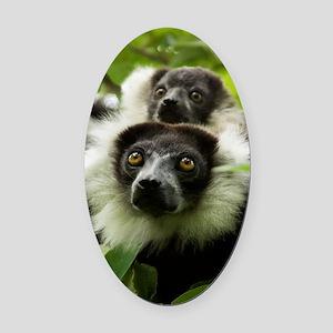 Black and white ruffed lemurs Oval Car Magnet