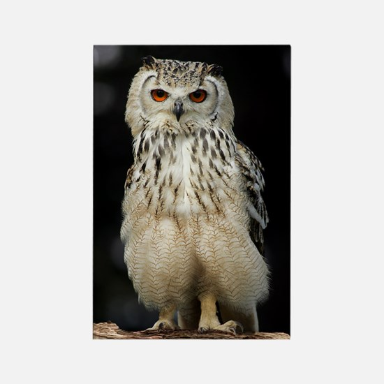 Bengalese eagle owl Rectangle Magnet