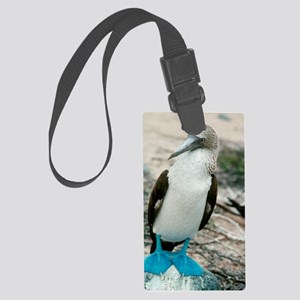 Blue-footed booby Large Luggage Tag