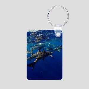 Blacktip reef sharks Aluminum Photo Keychain