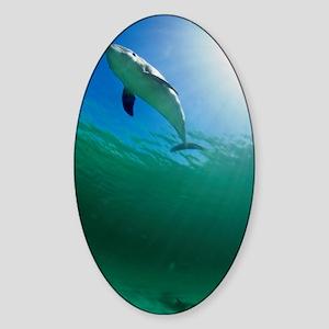 Bottlenose dolphin Sticker (Oval)