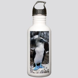 Blue-footed booby Stainless Water Bottle 1.0L