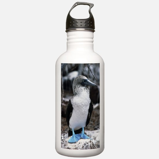 Blue-footed booby Water Bottle