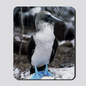 Blue-footed booby Mousepad