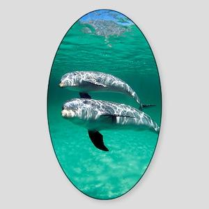 Bottlenose dolphins Sticker (Oval)