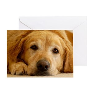 Golden retriever stationery cafepress m4hsunfo