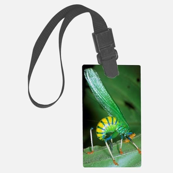 Bush cricket threat display Luggage Tag