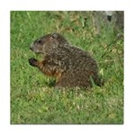 Young Groundhog Tile Coaster