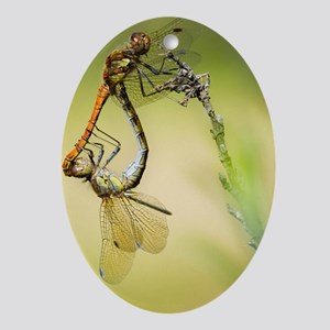 Common darter dragonflies Oval Ornament