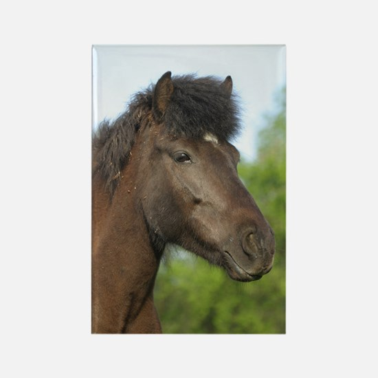 Icelandic horse Rectangle Magnet