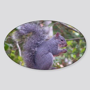 Western Gray Squirrel Sticker (Oval)