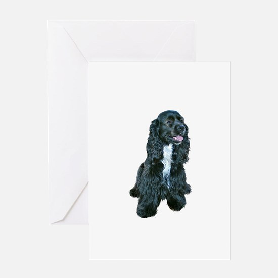 Cocker (black- white bib) Greeting Card