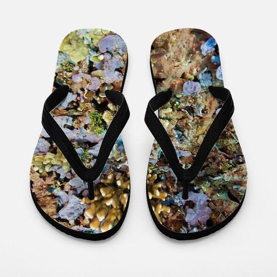 Coral reef community Flip Flops