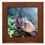 hawaiian green sea turtle Framed Tile