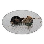 California Sea Otter Sticker