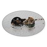 California Sea Otter Sticker